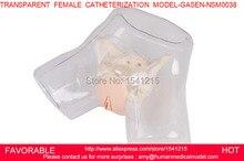 MEDICAL TRAINING FEMALE URETHRAL CATHETERIZATION MODEL NURSING MANNEQUINS TRANSPARENT FEMALE CATHETERIZATION MODEL GASEN NSM0038