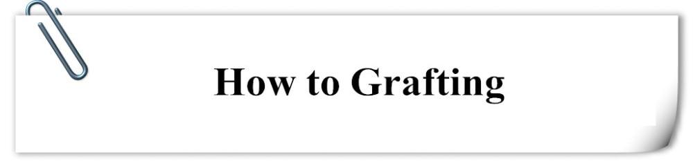 HOW graft