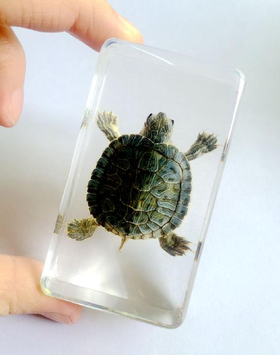 FREE SHIPPING Hand Attractive Specimen Real Tortoise Turtle Insect Jewelry все цены