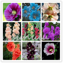 100 Pcs/Lot Mixed Hollyhock Flowers Bonsai Country Romance Bright Flower Garden Factory Whole Sale (Mixed Colors)Diy Home Garden