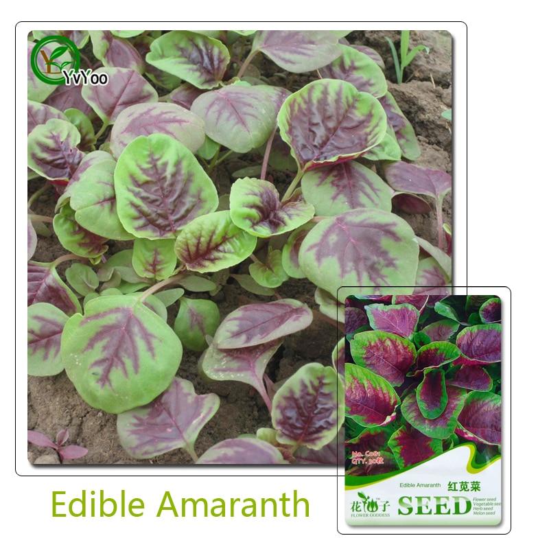 Edible Amaranth Seeds Bonsai garden plant non-GMO organ
