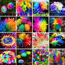 100pcs Mix Rainbow Daisy Chrysanthemum Flower Beautiful Bonsai Plants For Home Garden Potted Supplies Fast Shipping