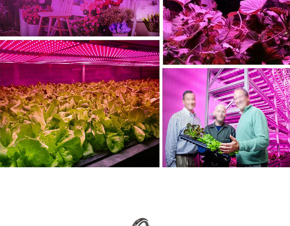 300W Full Spectrum LED Plant Grow Light Lamp For Plant Indoor Nursery Flower Fruit Veg Hydroponics System Grow Tent Fitolampy (16)