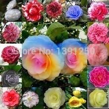 Высокое качество. Бесплатная доставка! 30 шт. традиционный знаменитый цветы, Всемирно известный цветы семена камелии