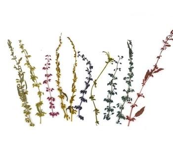 100 piezas prensadas flor seca Thymus mongolicus Ronn relleno para Resina epoxi colgante collar joyería fabricación artesanal accesorios DIY