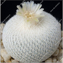 20 Seeds/pack Cacti Succulents Seeds Prevent Radiation Raros Cactos Seeds,Imported Cactus Hybrid Bonsai Seeds Succulentas Plant