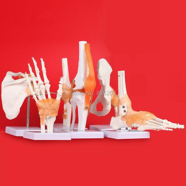Menschlichen anatomie skeleton Leben Größe set von 6 Gelenke ...
