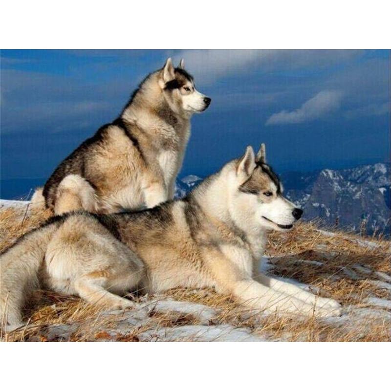 diamantové výšivky vlk, zvíře, cross steh, malba drahokamu, diy - Umění, řemesla a šití