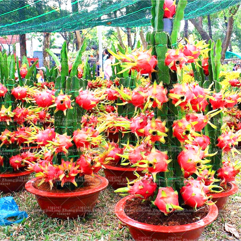 fruit trees for sale healthy vegetables and fruits