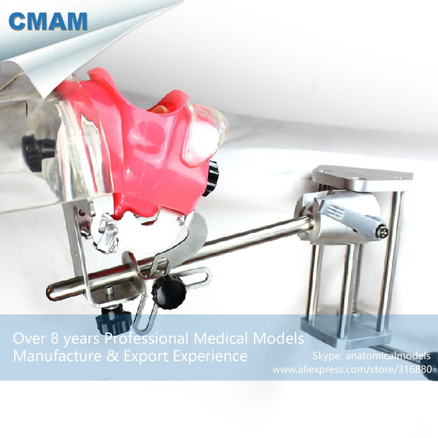 CMAM-DENTAL02-2 Table Phantom Head Tooth Prepare Practice Model dental phantom head dental phantom phantom