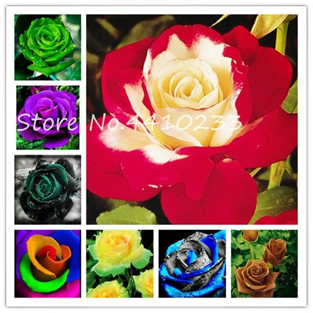 Карликовые деревья Rrare экзотические 100 шт. розы растения радуга розы карликовые деревья цветы многолетний сад Jardim Plante потери продвижение