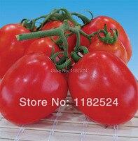 New! 50 - Kumari F1 - Tomato Seeds Fruit Vegetables Seeds