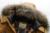 2015 Nuevos Hombres de la Moda Invierno Withe Escudo Pato Abajo Para Hombre Casual sólido Grueso Abrigos Chaqueta Con Capucha de Piel Falsa Parka Más Tamaño 13M0199