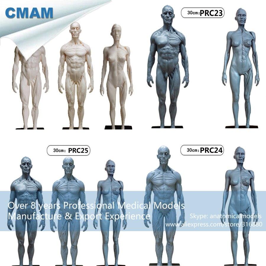 CMAM PRC23 PU Material 1:6 Grau Menschlichen Körper Anatomie ...