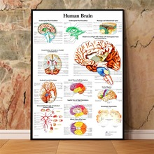 Human Body Anatomy Chart Wall Art Canvas Painting Poster For Home Decor Posters And Prints Unframed Decorative Pictures human body anatomy chart wall art canvas painting poster for home decor posters and prints unframed decorative pictures