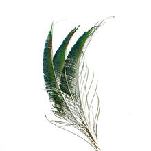 Wholesale 24pcs/lot Natural Peacock Feather 25-30cm for DIY Jewelry Wedding Halloween Decorative Feathers Plumes AccessoriesIF21(China)