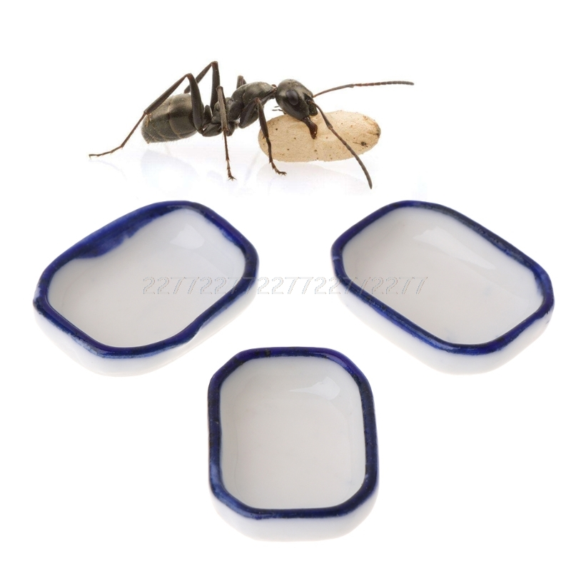 Bowl Nest Ant-Farm-Feeder House Feeding-Container Insect Water-Food Villa N24 3pcs Dropship
