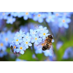 DIY Алмазные настенные художественные вышивки крестом картина пчелы цветок картина 5D Вышивка мозаика полностью квадратная дрель ручная раб...