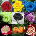Rare rose seeds,25 Colors Selection,home Garden Perennial plant flowers, Bonsai tree supplies,garden supplie