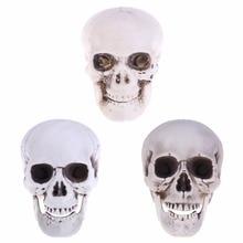 Unnatural Horror Human Plastic Skull For Coffee Bars Ornament