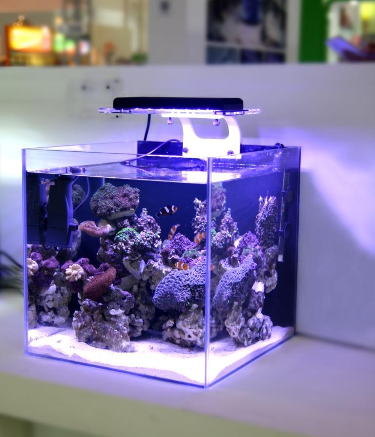 Marine reef tank LED light coral grow white blue aquarium