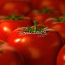 100 Tomato Tycoon  Seeds ~vegetable produce big ,sweet ,juicy tomatoes, Antioxidant