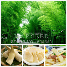 50 Chinese Bamboo Seeds,Ornamental and edible Plant , rich in Dietary fiber, very tasty ,ideal shade plant, heat resistant