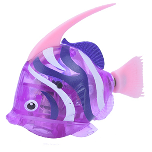 Angelfish Purple