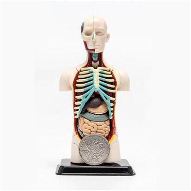 Online Shop 3d Mine Child Science Toy Human Anatomy Model Human