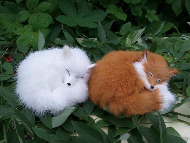 Il gatto e la volpe e bennato youtube