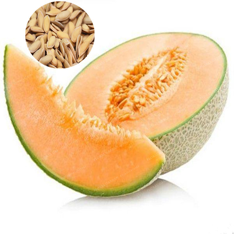 20 Pcs Cantaloupe Seeds Super Big Sweet Fruit Seed Delicious Organic Fruit Seed Plant Easy To Grow Home Garden Plant