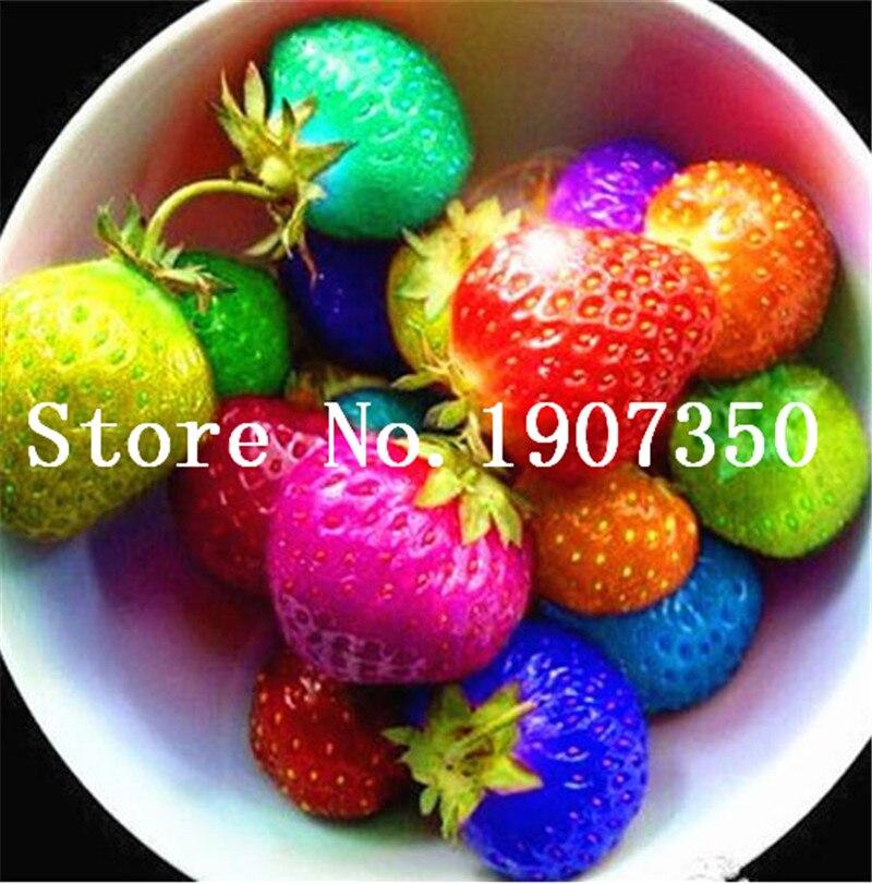 Delicious Multi-color Strawberry Bonsai 200 Pcs Black Blue White Strawberry Fruit Tree Potted Plants Home Garden True Variety