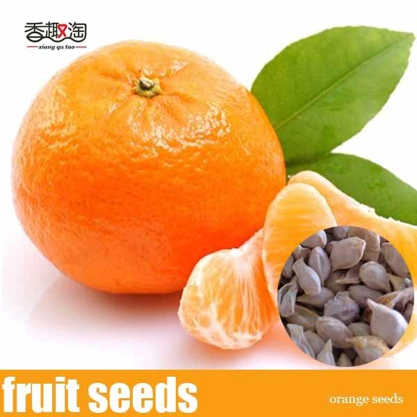 Edible Fruit Tree Seeds, Kumquat / Orange Seeds 50pcs/bag