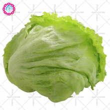 100PCS Lettuce Seeds Lactvca sativa Organic vegetables seeds Crisp Leaves on Compact medium Heads Sweet Salads Garden Vegetable