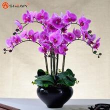 100pcs Phalaenopsis Orchid Seeds,22 varieties of Bonsai Flower Seeds,Senior Ornamental Orchid Plants Indoor