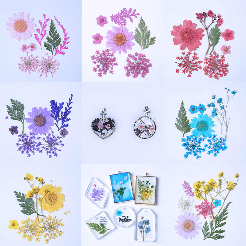 QIAOQIAO DIY  Pressed Flowers small Dried Flowers Scrapbooking dry DIY Preserved Flower Decoration Home Mini bloemen flores seca