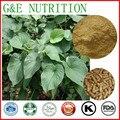 Продукт Здравоохранения кава корень Капсулы красоты продукта 500 мг х 100 шт.