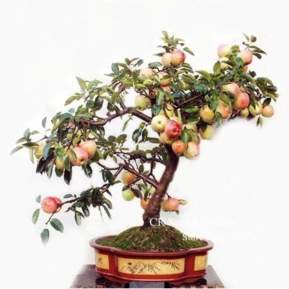 яблоки с доставкой в Россию