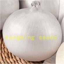bonsai 100 onion Belaya Koroleva - White Queen Organic Heirloom Vegetable for home garden plant