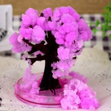 2017 10x8cm Pink Desktop Cherry Blossom Cool Japan!ThumbsUp!Magic Japanese Sakura Tree-Brand New Made in Japan Grow Paper Trees