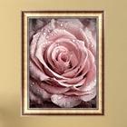 pink dew roses flowe...