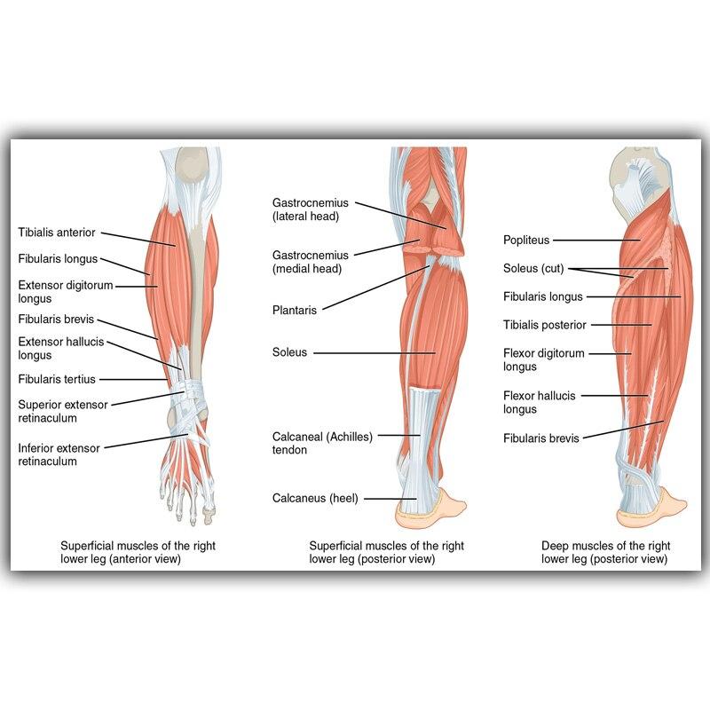 Berühmt Reale Abbildungen Von Menschlichen Knochen Fotos - Anatomie ...