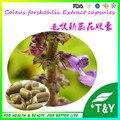 Forskolina Coleus Forskohlii Extracto de Calidad GMP Cápsulas 100 unids