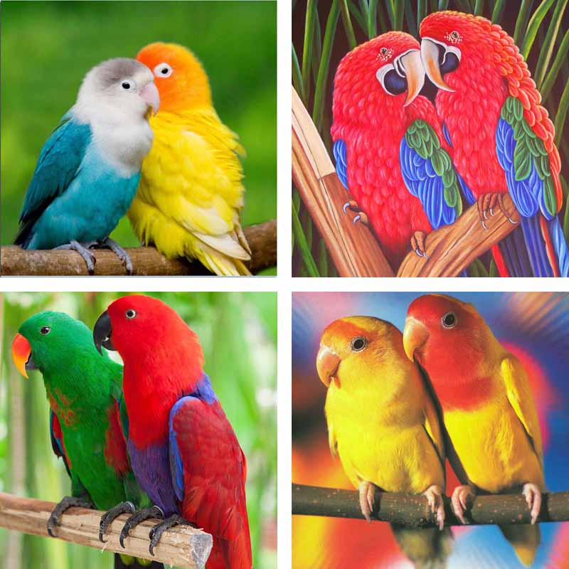 Citaten Love Bird : Aliexpress buy diy d diamond embroidery animal