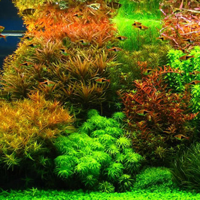 Hot Sale 1000pcs New aquarium grass seeds (mix) water aquatic plant seeds family easy plant seeds for decorate the aquarium