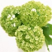unids verde semillas hydrangea belleza y fragancia las plantas del