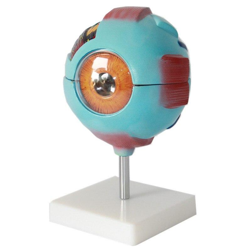 Montieren Vergrößern 6x lebensgroße Kunststoff PVC Menschlichen Auge ...
