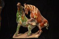 Коллекционные династии Цин Китайская керамика * Лошадь три Цвет * Сан Цай *, лошадь любовью, бесплатная доставка