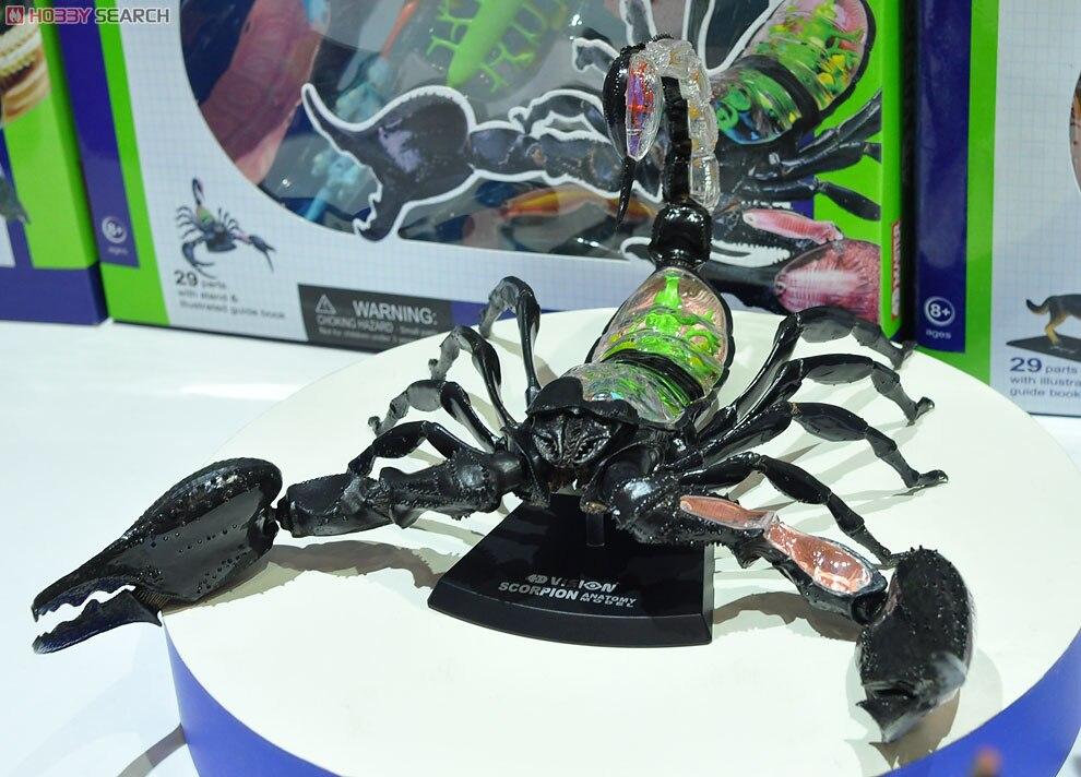 Maestro 4D visión esqueleto anatomia escorpión esqueleto maqueta pie ...