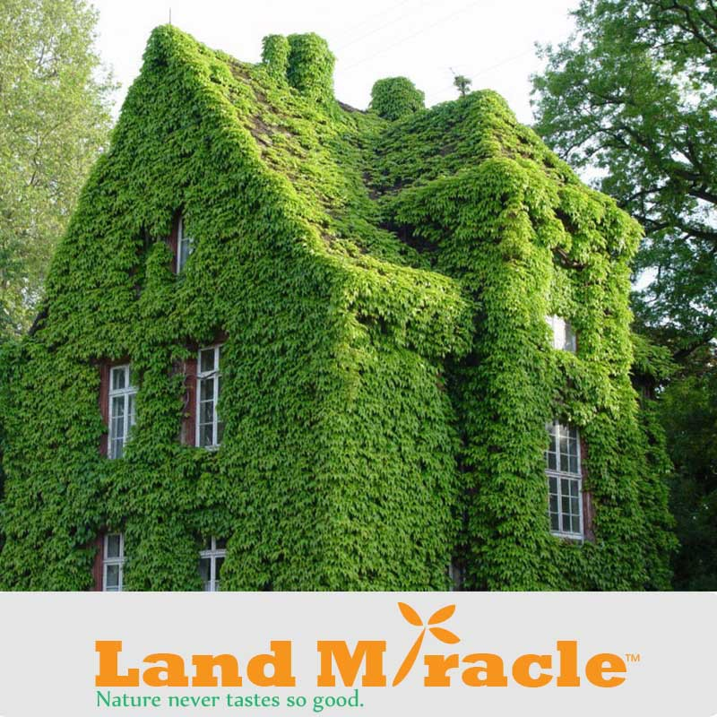 Image Result For Landscaping Supply Store
